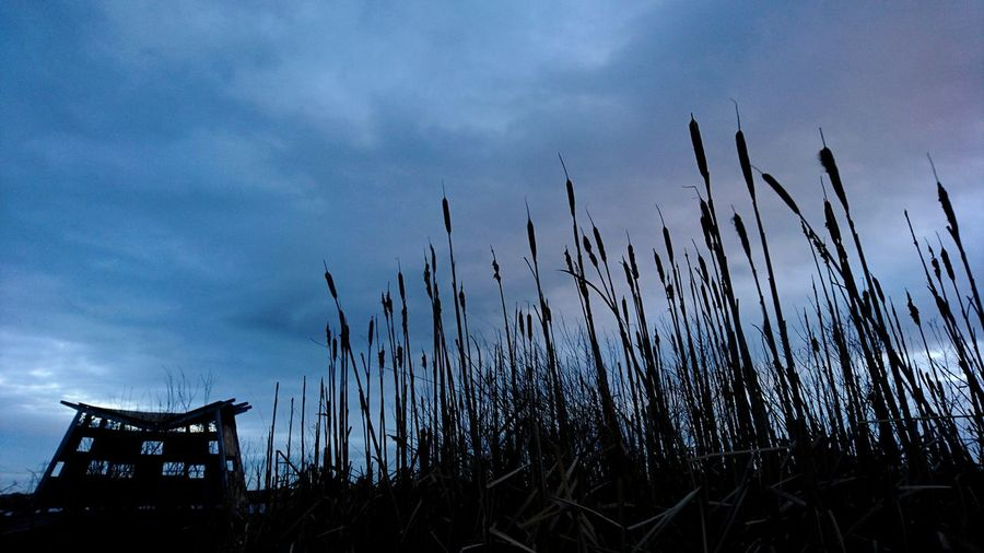 Silhouette Sky Landscape Tranquility Outdoors Birdhide Bird Watching Rspb_love_nature Cloud - Sky Sunset RSPB EyeEm Nature Lover EyeEm Best Shots