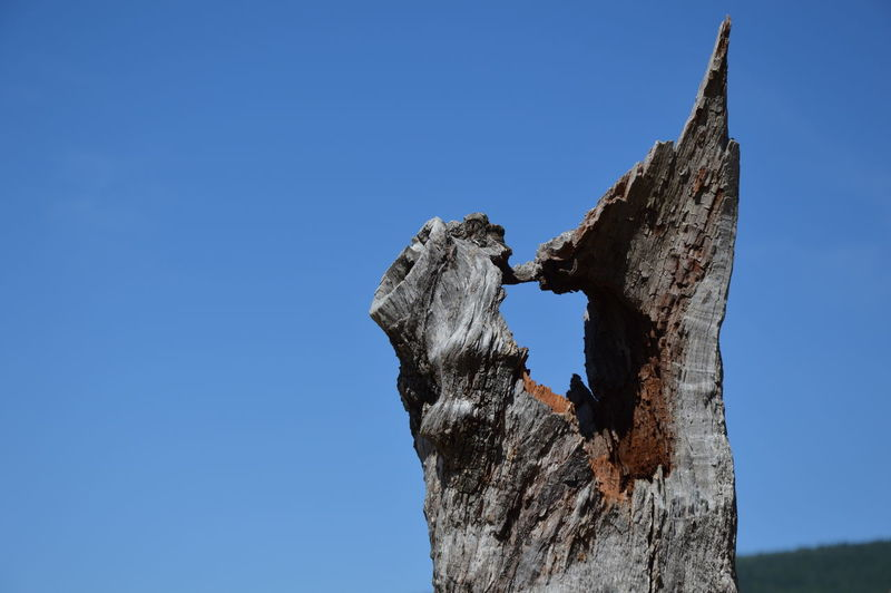 Low angle view of damaged tree trunk against clear blue sky