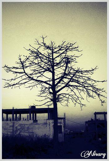 LongTime  Examsdone✔️ Happy Nature Treebranches Dawn Bhopal Madhyapradesh India