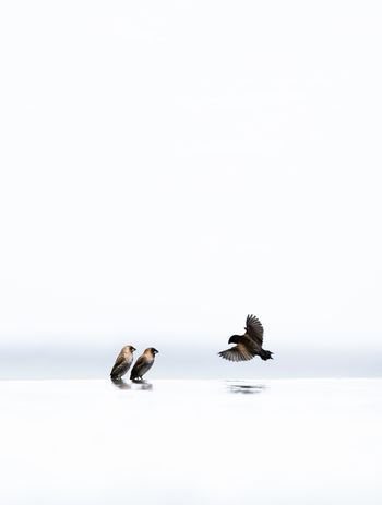 Minimal flight Olympus Animal Bird Birds Minimal Minimalism Ocean Sea Sky Water Visual Creativity