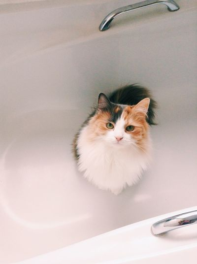 Portrait Of Cat In Bath
