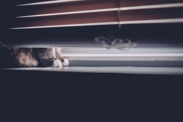 Blinds Cats Cute Light Paws Peeking White Paws Window Window Ledge Window Sill