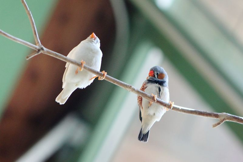 Low angle view of penguin zebra finches perching on twig at weltvogelpark walsrode