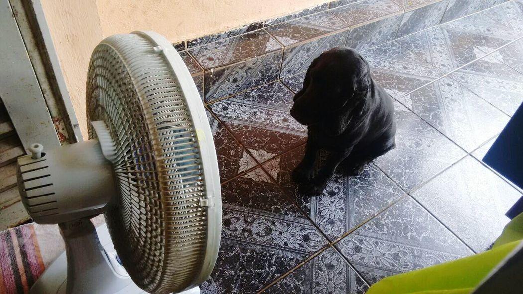 Meu dog com calor na frente do ventilador.... Fofo