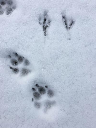 Spuren Spuren Im Schnee Schnee Vogelspuren Katzenspuren Winter Snow Cold Temperature Weather Nature White Color Animal Track Paw Print Day Outdoors No People Frozen Field Close-up Beauty In Nature (null)Hundespuren Im Schnee