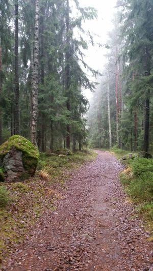 выборгский район ленобласть Лес туман Forest Vyborg выборг Лес в Vyborg, Russia Forest прогулка Fog