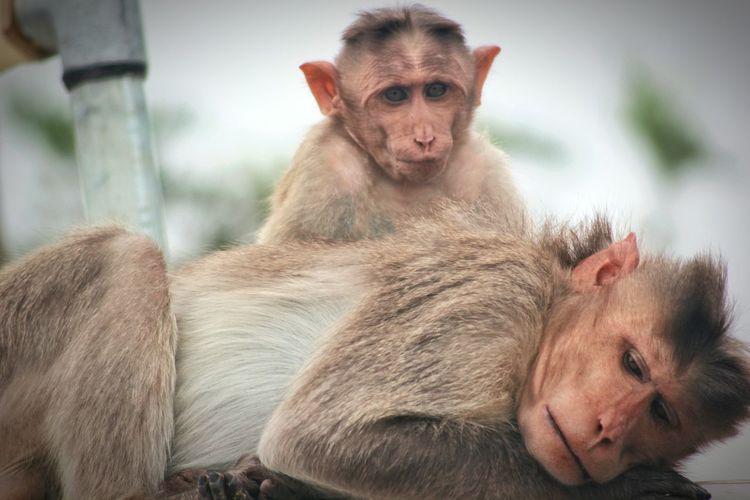 Monkey Life Monkey Love Mokey Life Monkey Family Mokeywithitschild Mokey Face Mokeys Monkey Fun Monkey Enjy