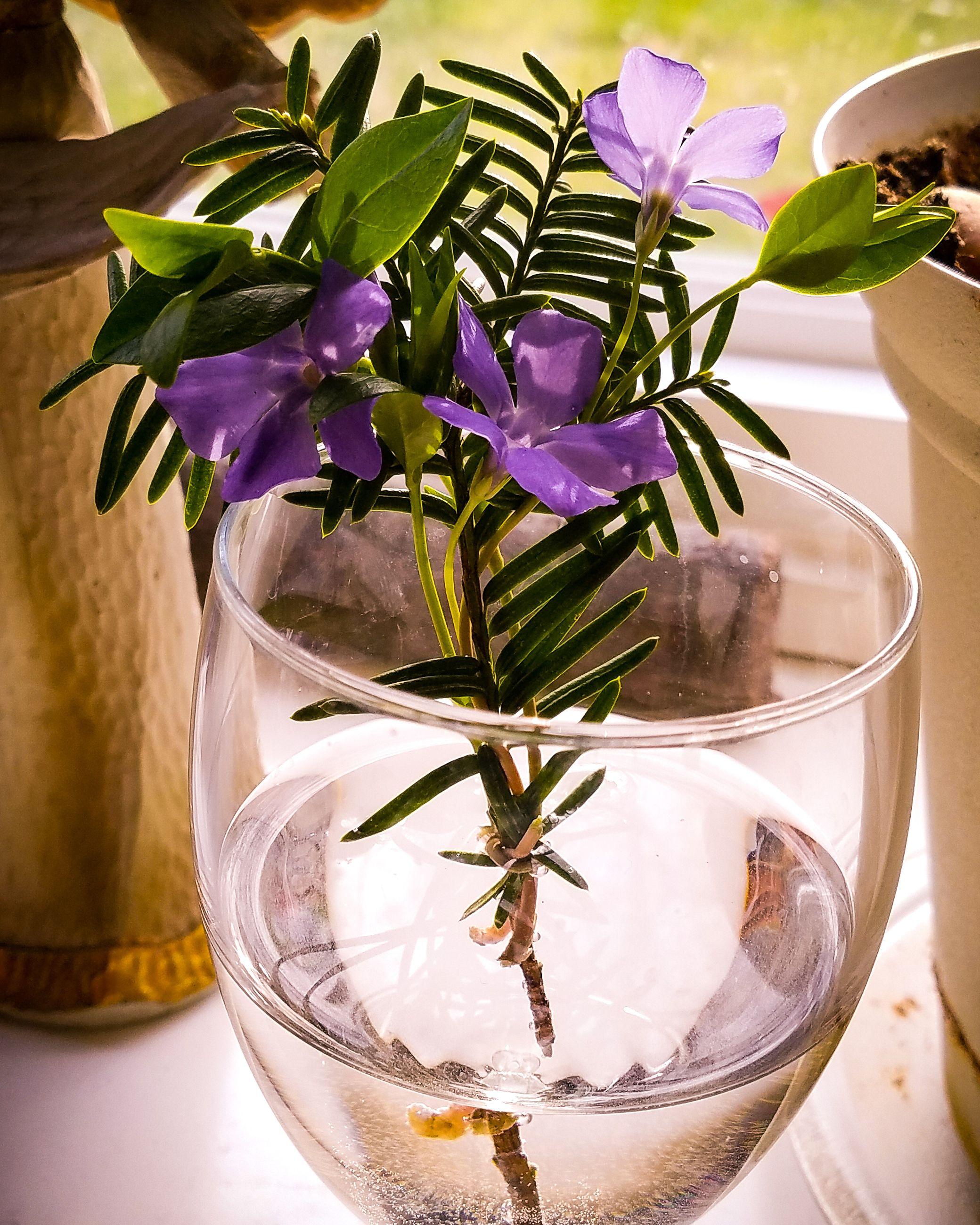 plant, flowering plant, flower, freshness, vase, beauty in nature, nature, indoors, close-up, leaf, table, plant part, glass - material, vulnerability, no people, fragility, transparent, flower head, glass, purple, flower arrangement