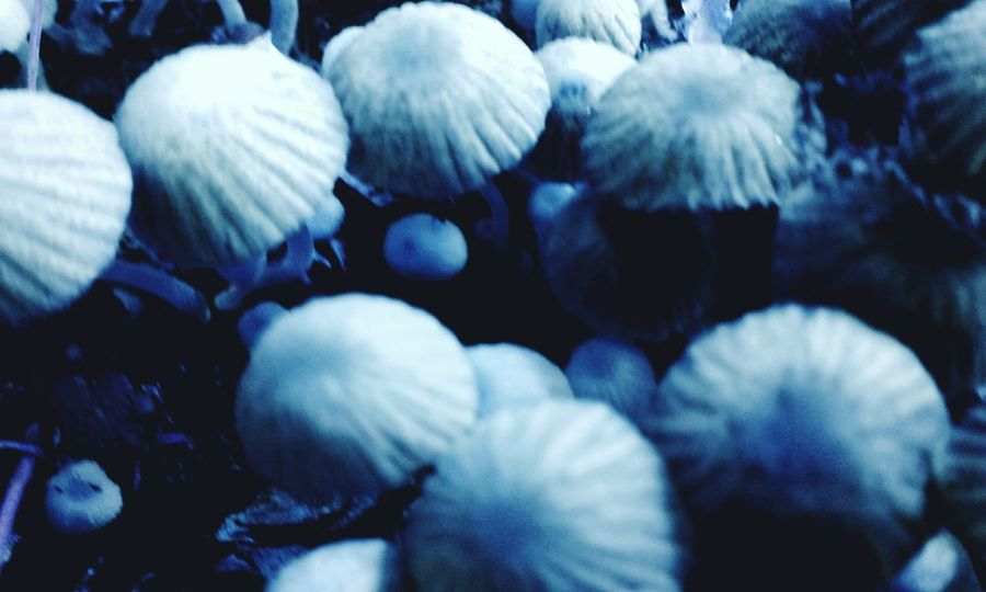 Fungi Fungi🍄 Close-up Edit Outside Wildlife Outdoors❤ Outdoors Photograpghy  Outside Photography Out Blue Outdoors Shrooms ShroomZoom Shroomers FungiPorn