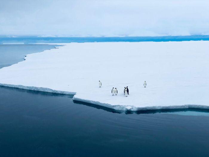 Penguins on frozen sea