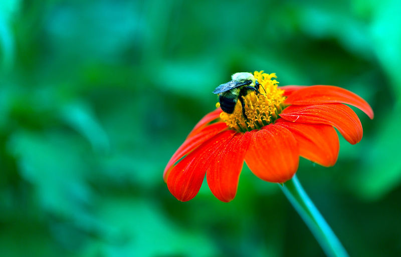 Bee Animal Themes Animals In The Wild Beauty In Nature Bee Close-up Flower Flower Head Focus On Foreground Fragility Green Color Growth Insect Nature No People One Animal Petal Plant Pollination