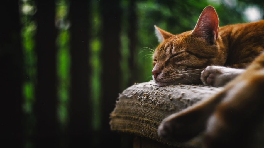 Close-Up Of Cat Sleeping Outdoors
