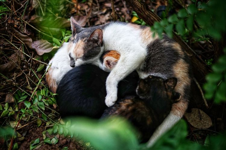 Cat Family Animal Family No People No Person Day Close-up Grass Cat Domestic Cat Tabby Kitten Pets Pet Bed Yellow Eyes Persian Cat  Animals In Captivity Stray Animal