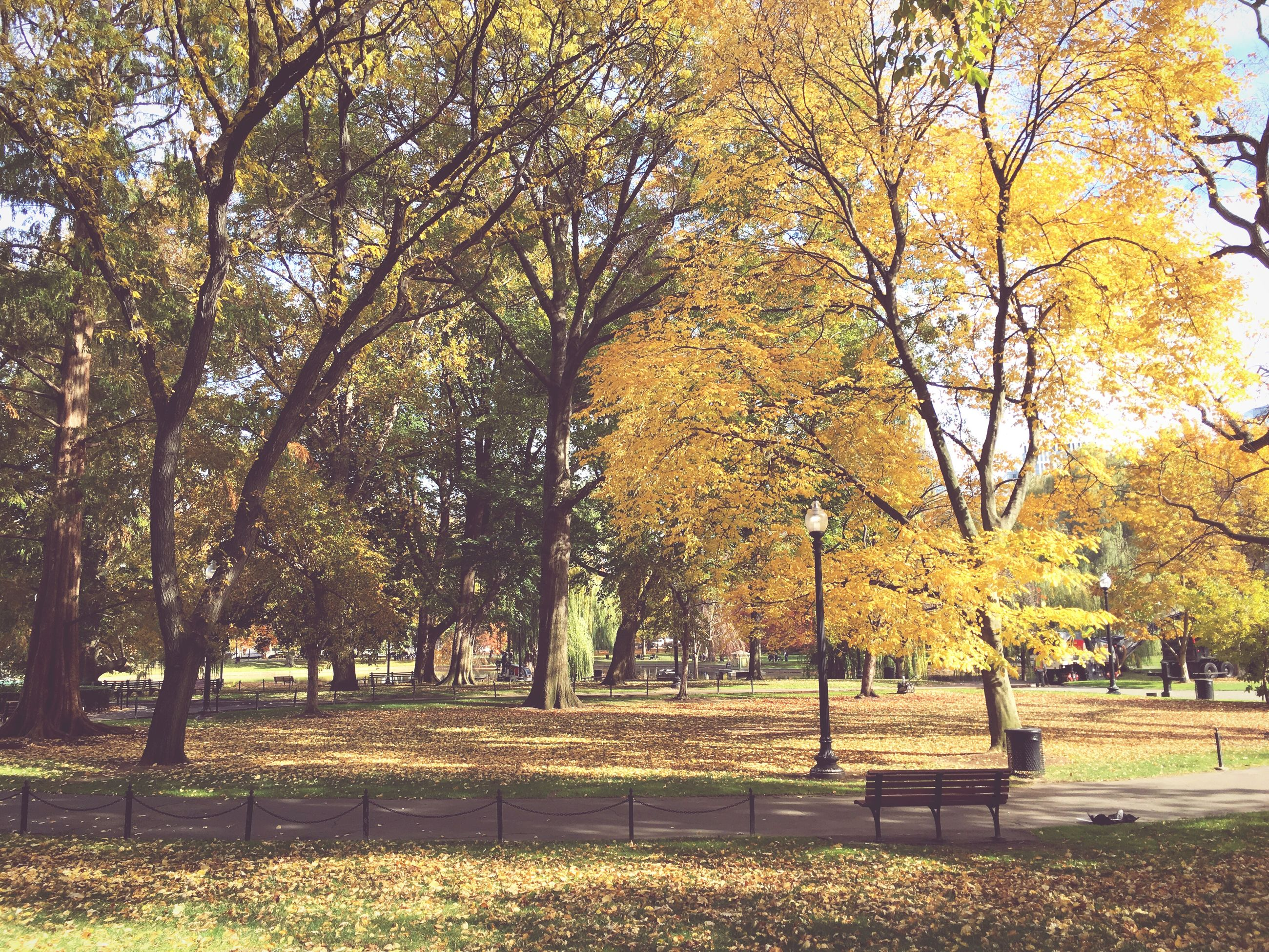 tree, autumn, park - man made space, tranquility, yellow, change, growth, branch, beauty in nature, nature, park, tranquil scene, grass, season, scenics, green color, tree trunk, sunlight, bench, shadow