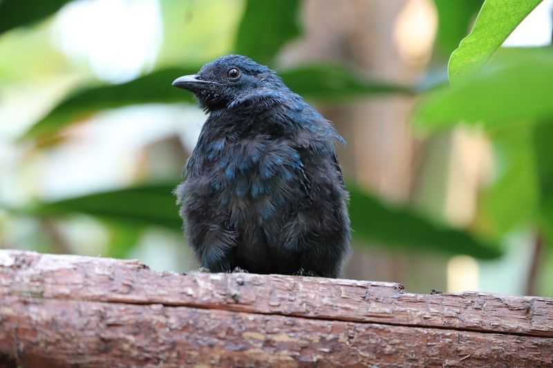 Baby bird, plumage Animal Themes Animal Animal Wildlife Vertebrate Animals In The Wild One Animal Bird Perching Wood - Material Day Black Color Focus On Foreground No People Close-up Raven - Bird Outdoors Nature Tree Plant Looking Away