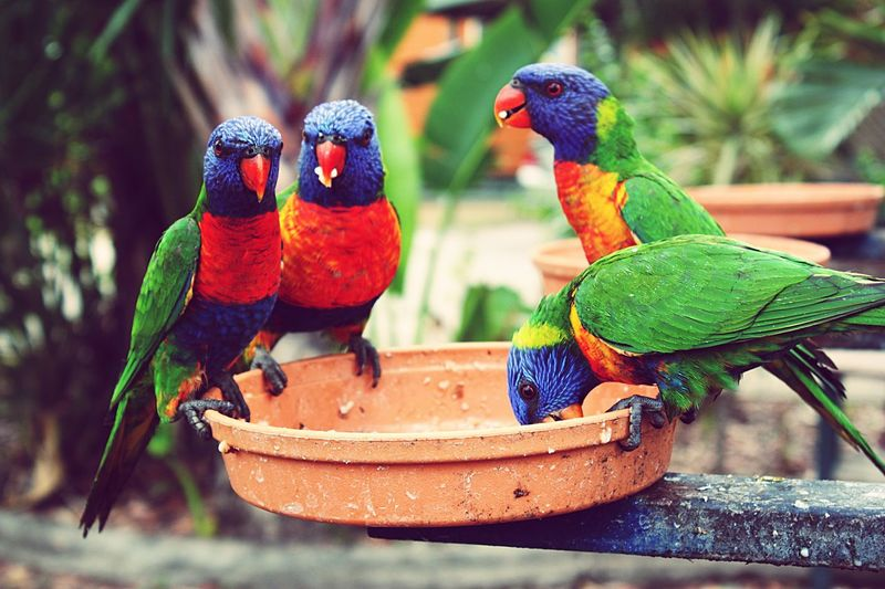 Close-up of macaws perching on bird feeder
