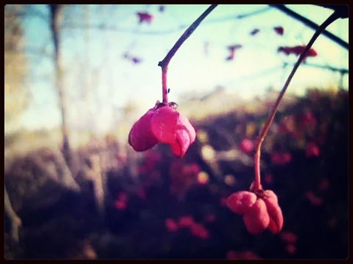 Nature Kruklanki Spring