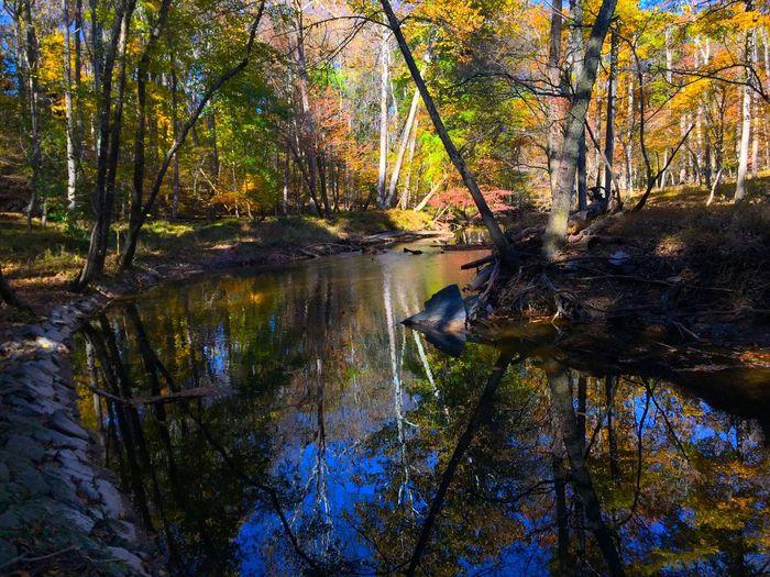 Northwest Branch Water Reflections