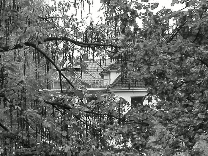 Auf der Brücke 6 Tree Growth Nature No People Beauty In Nature Branch Plant Day Outdoors Sky Greenhouse