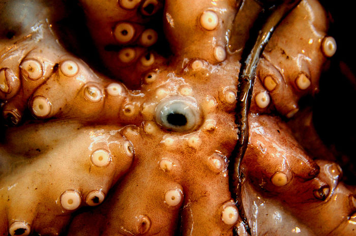 Calamari Calamary Cupping Vessel Eye Food Mouth Octopus Portugal Madeira Sea Animal Squid Chance Encounters