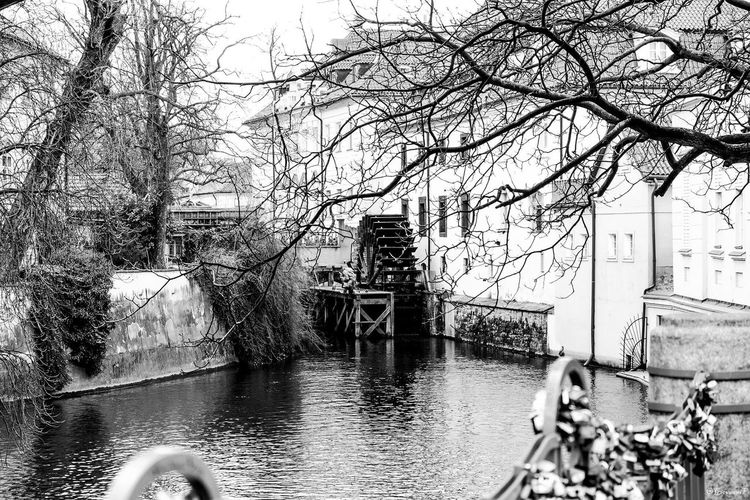 Tree Architecture Water Bare Tree Mode Of Transport Built Structure Transportation Day Outdoors Building Exterior Bridge - Man Made Structure River Bicycle One Person Real People Men Nautical Vessel City Nature Sky Photography Black And White Photooftheday Blackandwhitephotography Streetphotography ramificazioni naturali