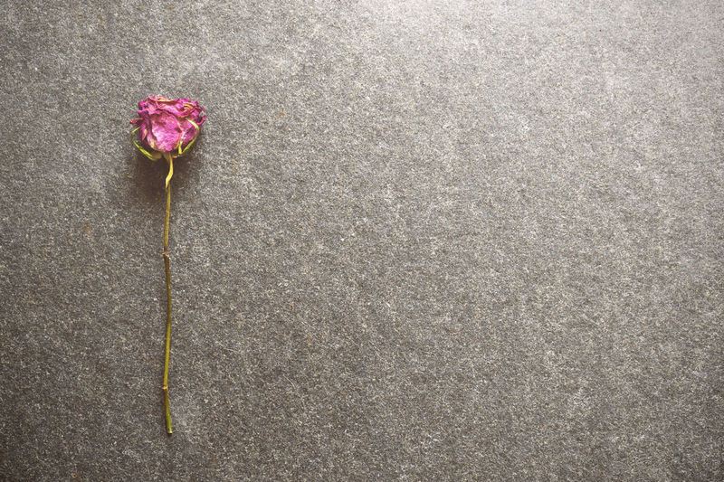 Backgrounds Beautiful Dried Plant Dry Flower Flowers Grey Isolated Marble Pink Color Rose - Flower Roses Valentine Vintage