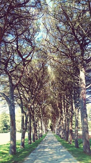 Tree Day Outdoors The Way Forward No People Nature Beauty In Nature Sky Brijuni