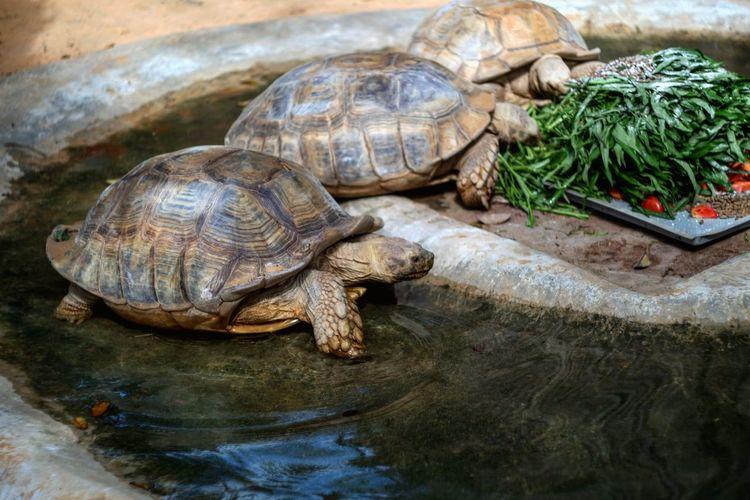 Close-up of  tortoises