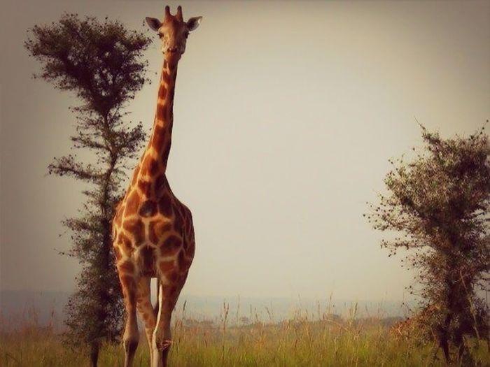 Early morning in Africa #safari #africa