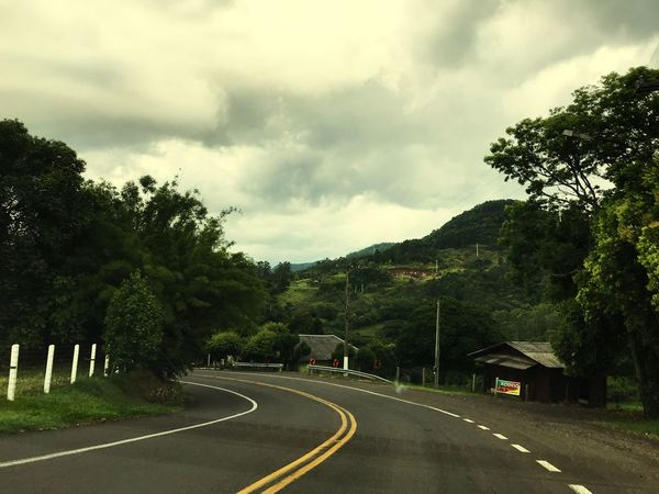 Tree Sky Plant Road Transportation Sign