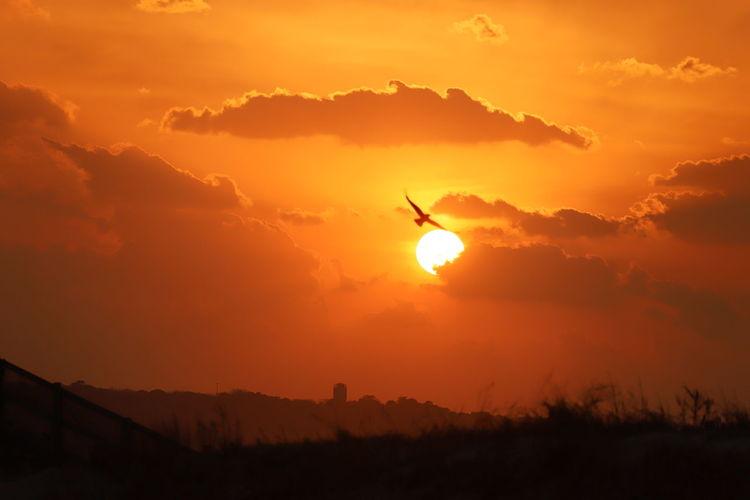 【日本の風景】 Sunset_beach Sunset 夕陽 夕方 Photography Canon Nature Sunset_collection Japan 影画 Silhouettes The Week on EyeEm EyeEm Sport Silhouette Mountain Adventure Forest Fire Sky