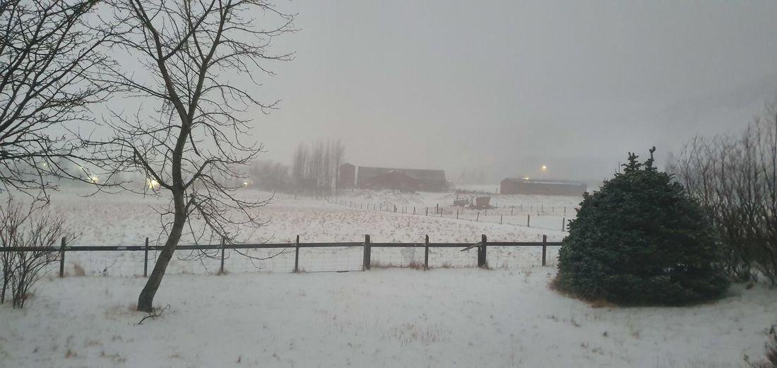 today Tree Snow