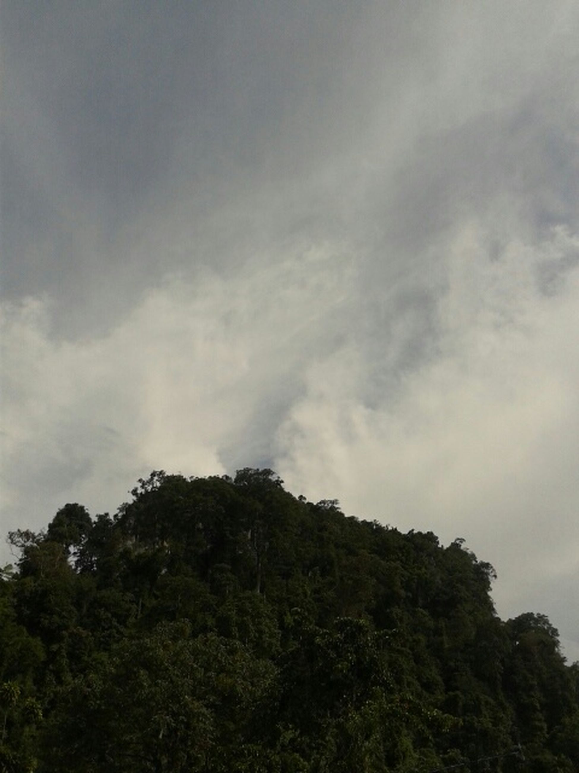 tree, sky, low angle view, tranquility, cloud - sky, beauty in nature, tranquil scene, nature, scenics, growth, cloudy, cloud, day, outdoors, forest, no people, idyllic, non-urban scene, green color, weather