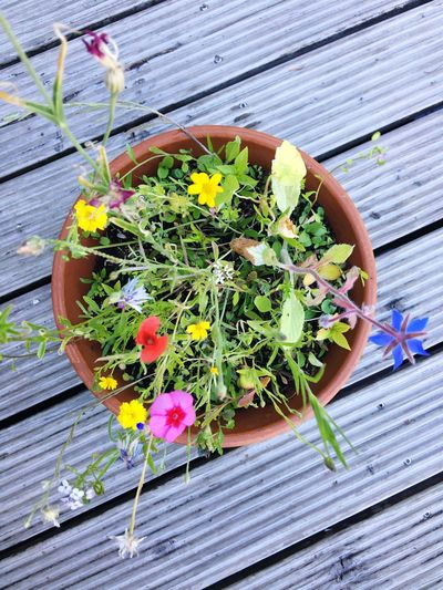 Wood - Material Flowering Plants Plant Flower Freshness High Angle View Wood - Material No People Beauty In Nature Potted Plant Nature Growth Directly Above Green Color Herb Outdoors