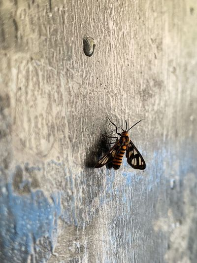 Insect on a