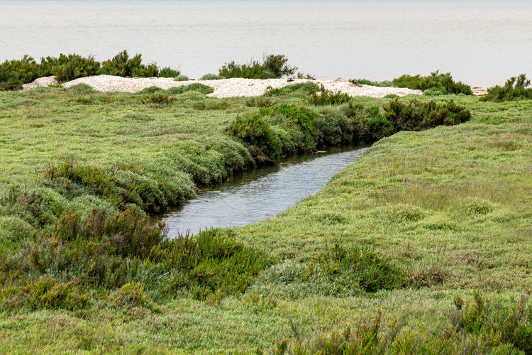 Water channels to the beach through coastal vegetation