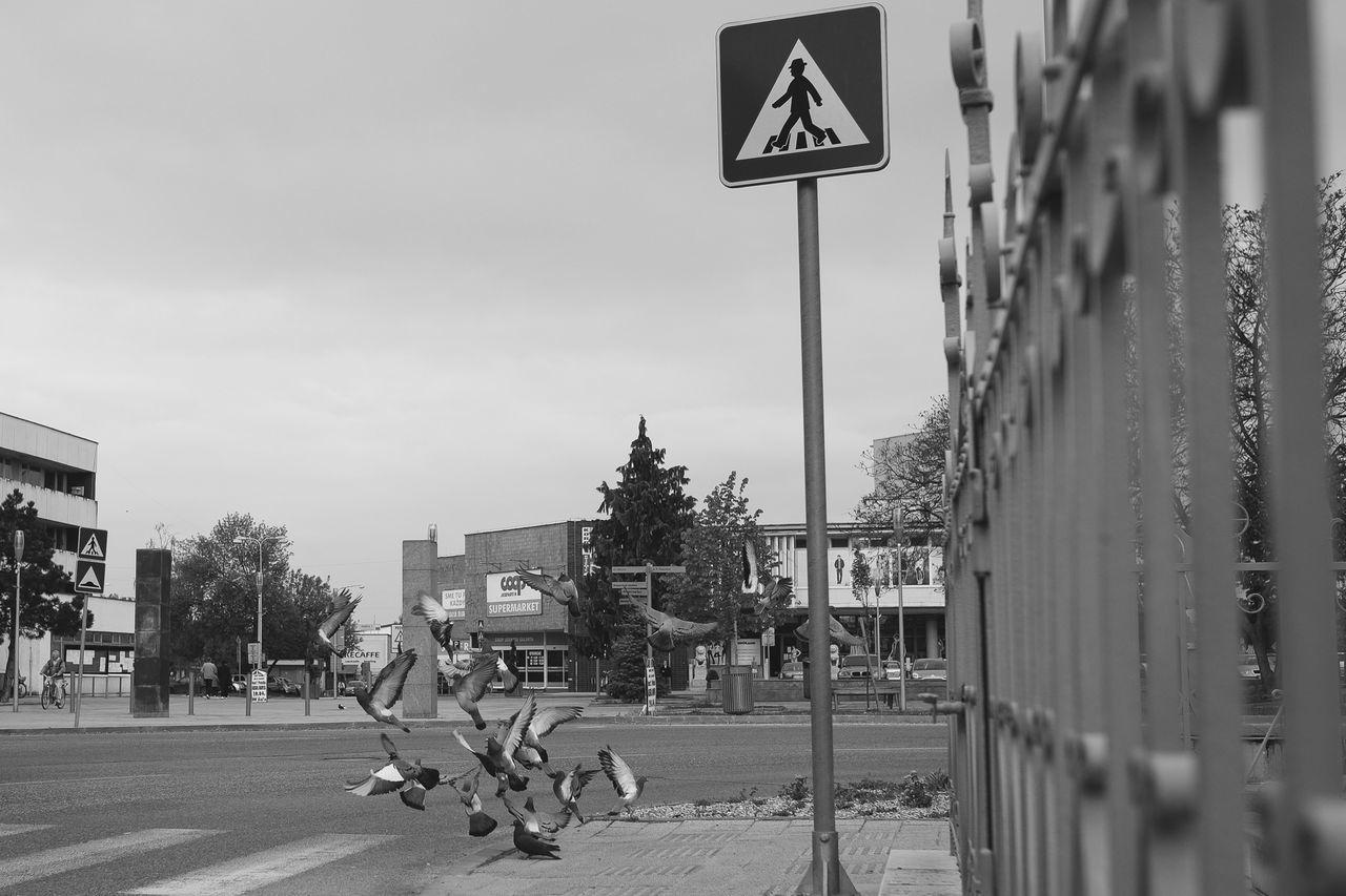 CROSSWALK or CROSSING? Shootermag Blackandwhite Streetphotography AMPt_community