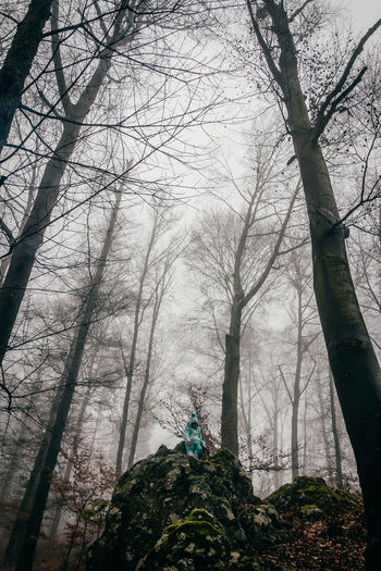 Tree Low Angle View Nature Sky Growth Outdoors Beauty In Nature Nature Landscape Taking Photos Adventure Low Angle View Forest Vscofilm Plant People Fog An Eye For Travel