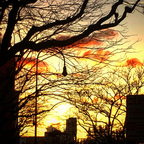Sunrise in the East Village Colors Light Light And Shadow Manhattan Shadow Sky Sunrise Tree Branches Trees Urban Landscape Winter Sky