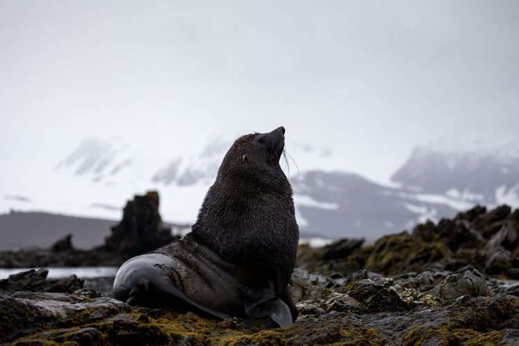 Seal relaxing on rock against sky