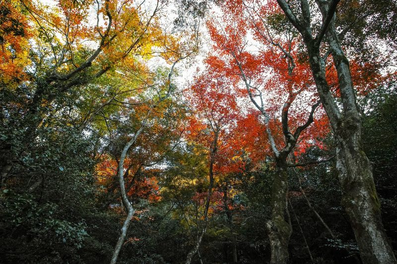 Shisendo Kyoto Autumn colors Autumn Leaves Autumn🍁🍁🍁 Autumn Collection Leaves_collection Leaves 🍁 Tree Trunk TreePorn Nature EyeEm Nature Lover Nature_collection Nature Photography Taking Photos EyeEm Best Shots EyeEm Gallery From My Point Of View The Week on EyeEm Full Frame Tree Backgrounds Plant No People Growth Branch Nature Beauty In Nature Multi Colored Outdoors