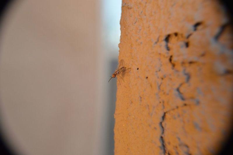 Nature Bugs Outdoor Photography Arizona Fly Desertlife Stucco Wall Bugonwall Bug Buglife Flyonwall