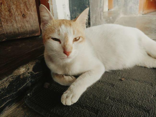 Hello World my cat