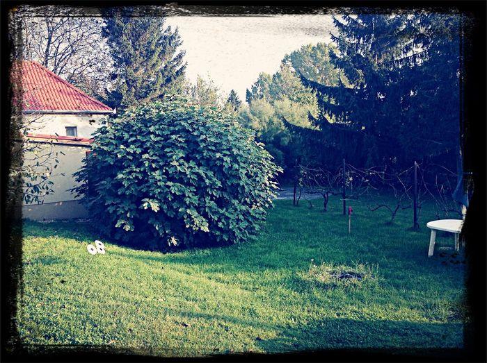 My secret garden... Enjoying Life Relaxing