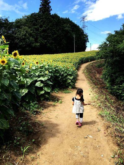 Summer Sunflower Plant Child Childhood Walking