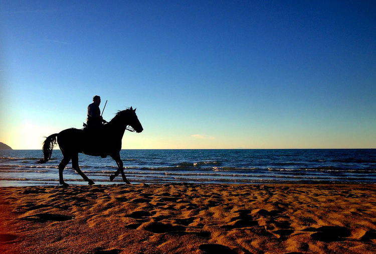 Beach Beauty In Nature Clear Sky Horizon Over Water Horse Horse Riding Horse Riding At The Beach Nature One Animal One Person Outdoors Sand Sea Silhouette Sky Sunset Tranquil Scene