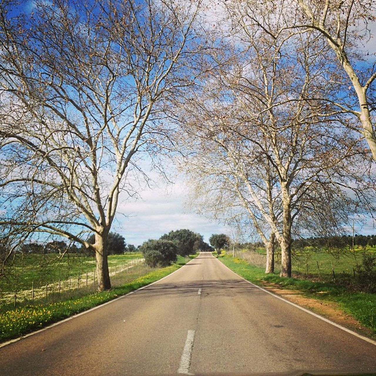 COUNTRY ROAD ALONG TREES ON LANDSCAPE