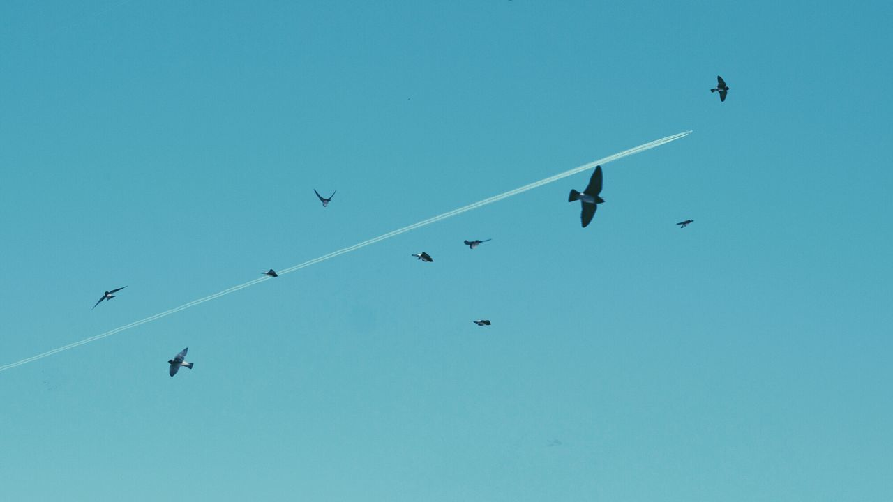 Low angle view of birds and vapor trail against clear blue sky