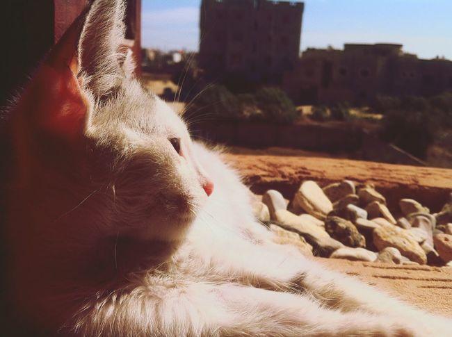 Laying Down Cat Taking Photos Relaxing Enjoying The View Ebeshti Hanging Out
