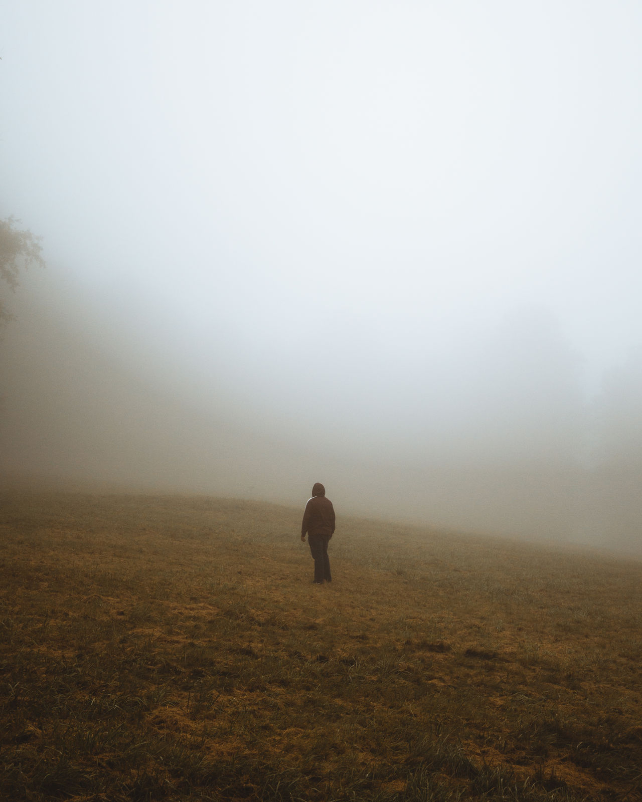 fog, one person, land, field, beauty in nature